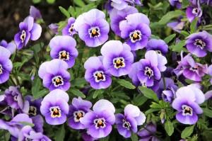 flowers-200270_640-300x199