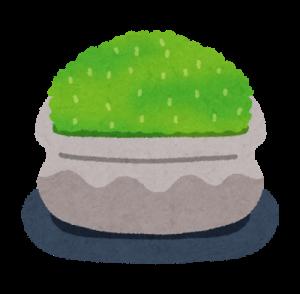 bonsai_koke-300x294